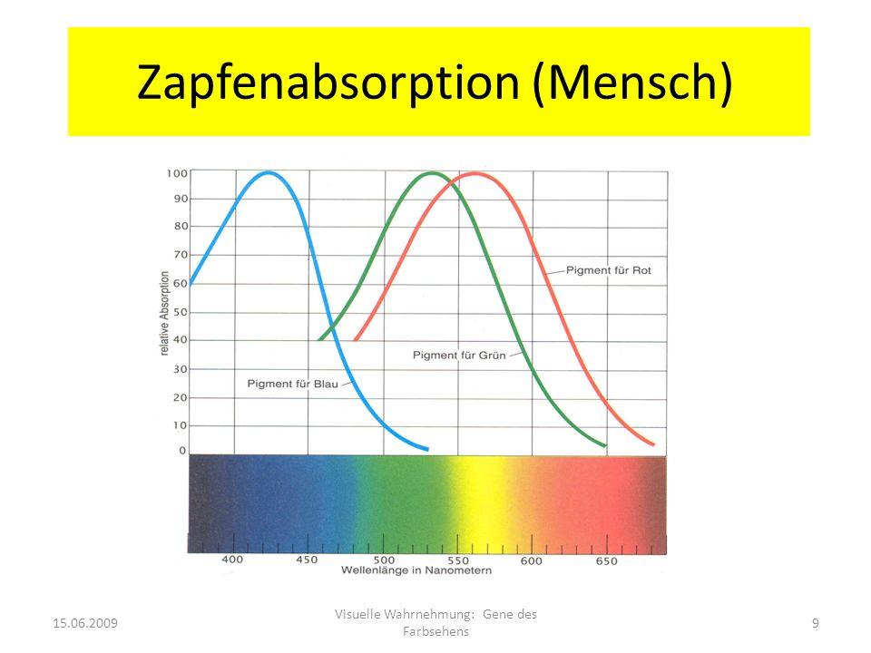 Zapfenabsorption (Mensch)
