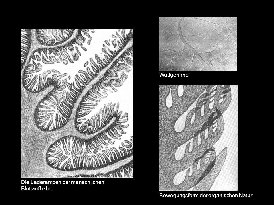 Wattgerinne Die Laderampen der menschlichen Blutlaufbahn Bewegungsform der organischen Natur