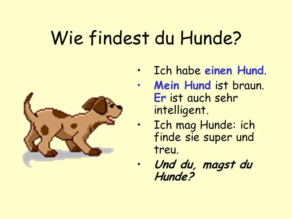 Wie findest du Hunde Ich habe einen Hund.