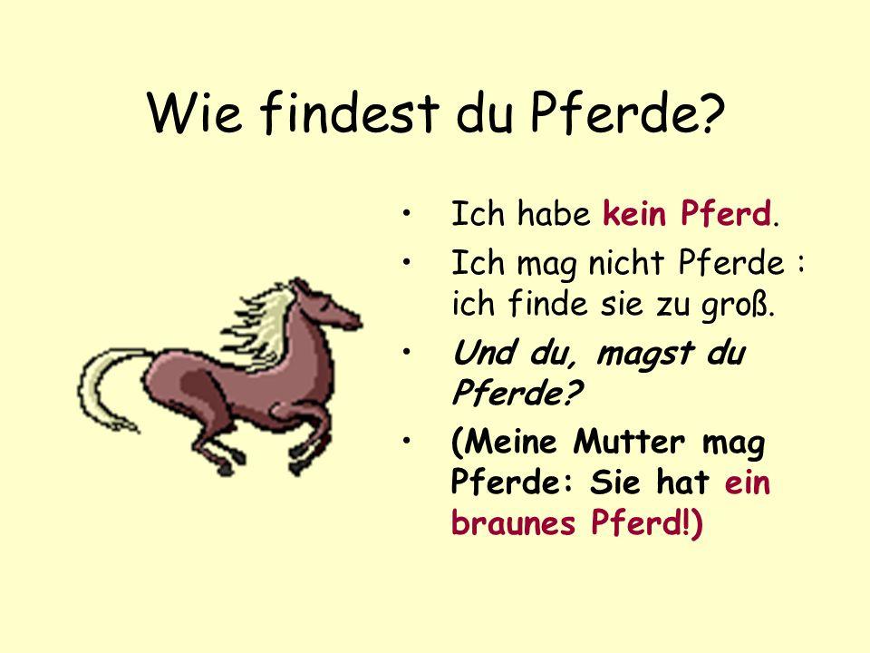 Wie findest du Pferde Ich habe kein Pferd.