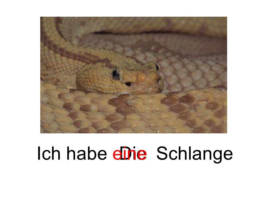 Ich habe eine Die Schlange