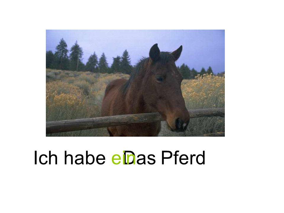 Ich habe ein Das Pferd