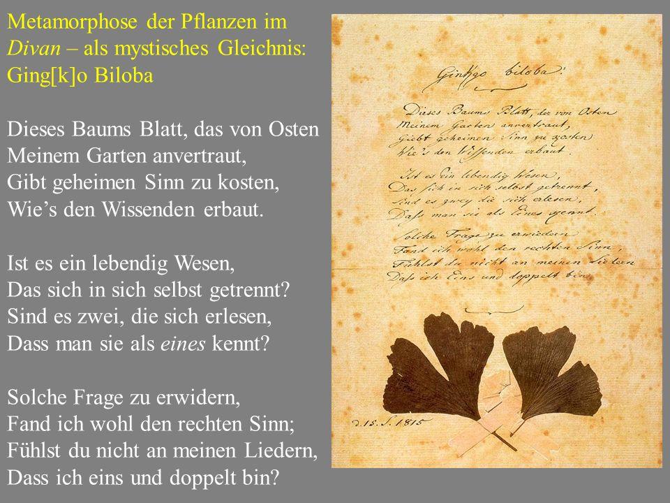 Metamorphose der Pflanzen im Divan – als mystisches Gleichnis: