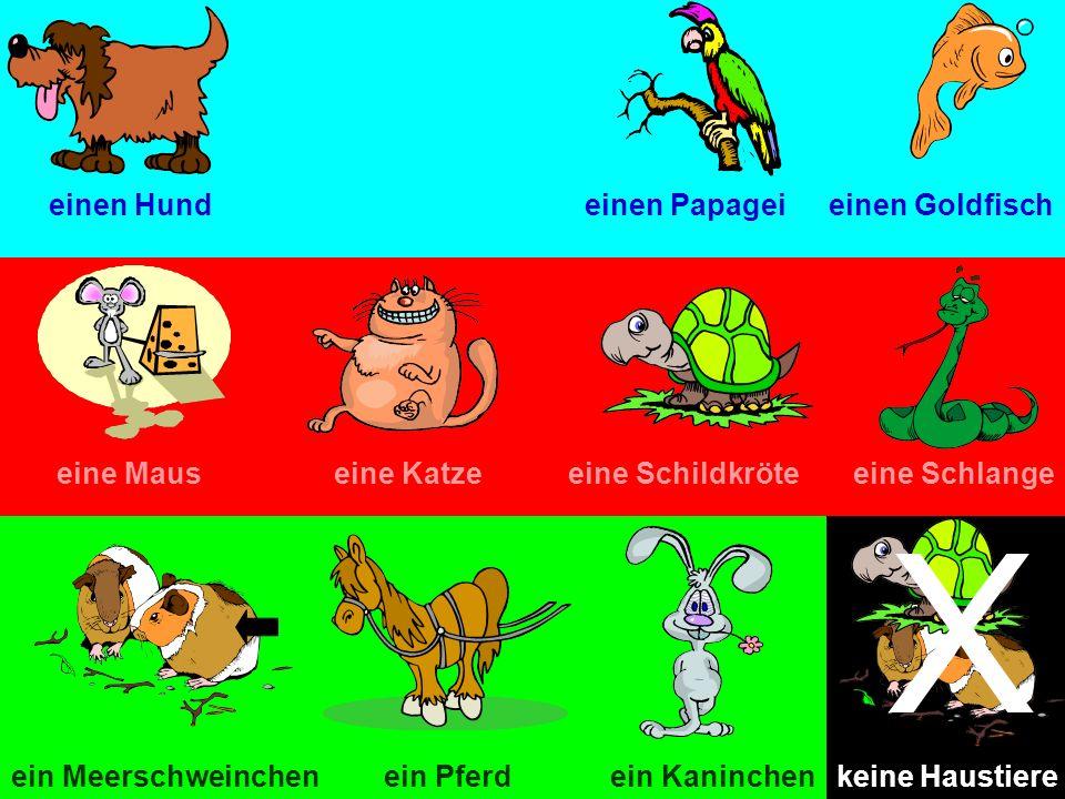 X einen Hund einen Papagei einen Goldfisch eine Maus eine Katze