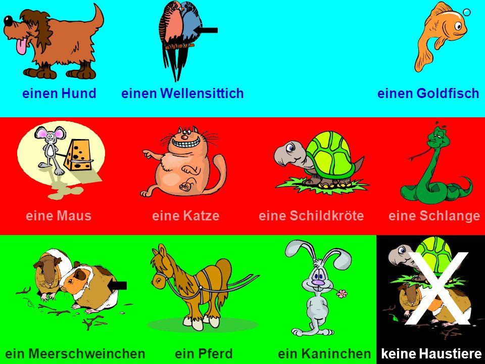 X einen Hund einen Wellensittich einen Goldfisch eine Maus eine Katze