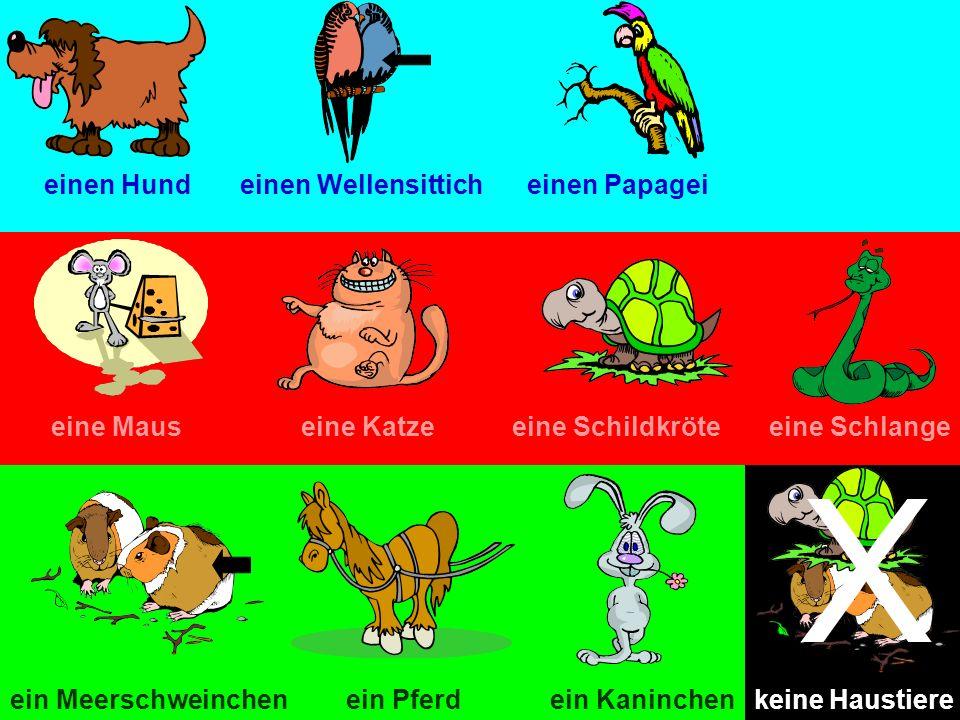 X einen Hund einen Wellensittich einen Papagei eine Maus eine Katze