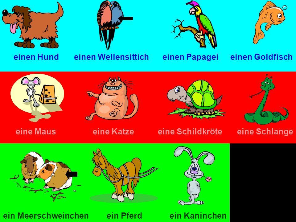 einen Hund einen Wellensittich. einen Papagei. einen Goldfisch. eine Maus. eine Katze. eine Schildkröte.