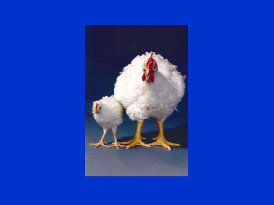 Tierschutz im Unterricht - Nutztiere