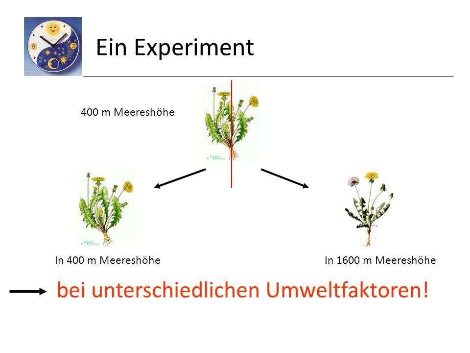 Ein Experiment bei unterschiedlichen Umweltfaktoren! 400 m Meereshöhe
