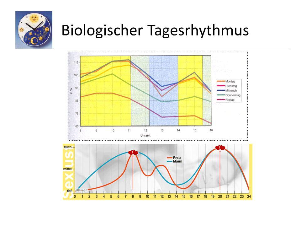 Biologischer Tagesrhythmus