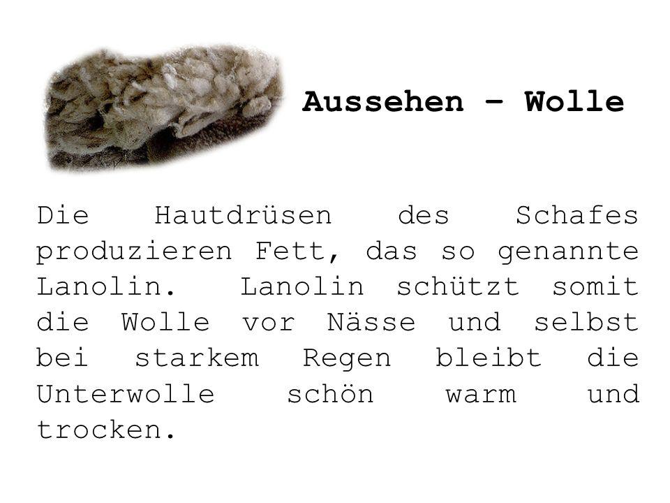 Aussehen – Wolle