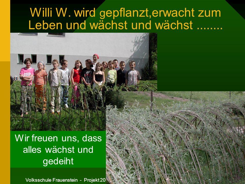 Willi W. wird gepflanzt,erwacht zum Leben und wächst und wächst ........