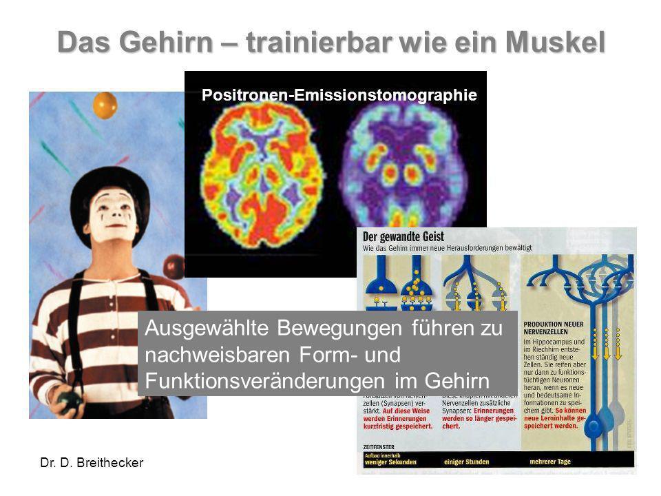 Das Gehirn – trainierbar wie ein Muskel