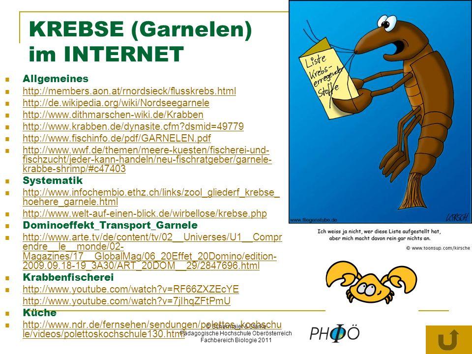 KREBSE (Garnelen) im INTERNET