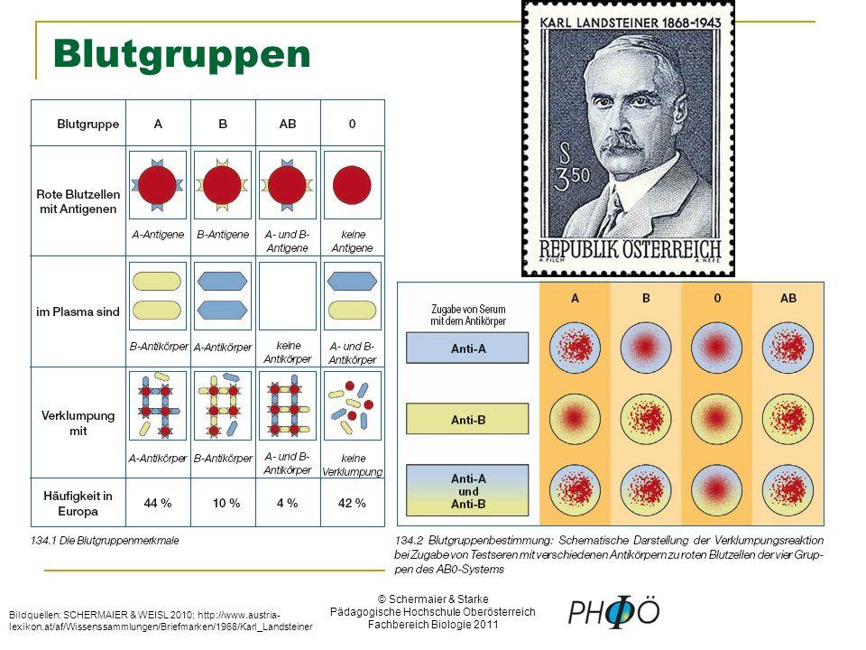 Fein Blutgruppen Und Bluttransfusionen Arbeitsblatt Antworten Ideen ...