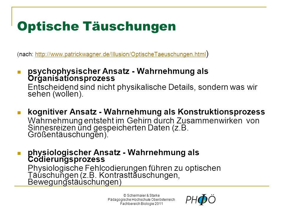 Amazing Täuschungen Arbeitsblatt Motif - Kindergarten Arbeitsblatt ...