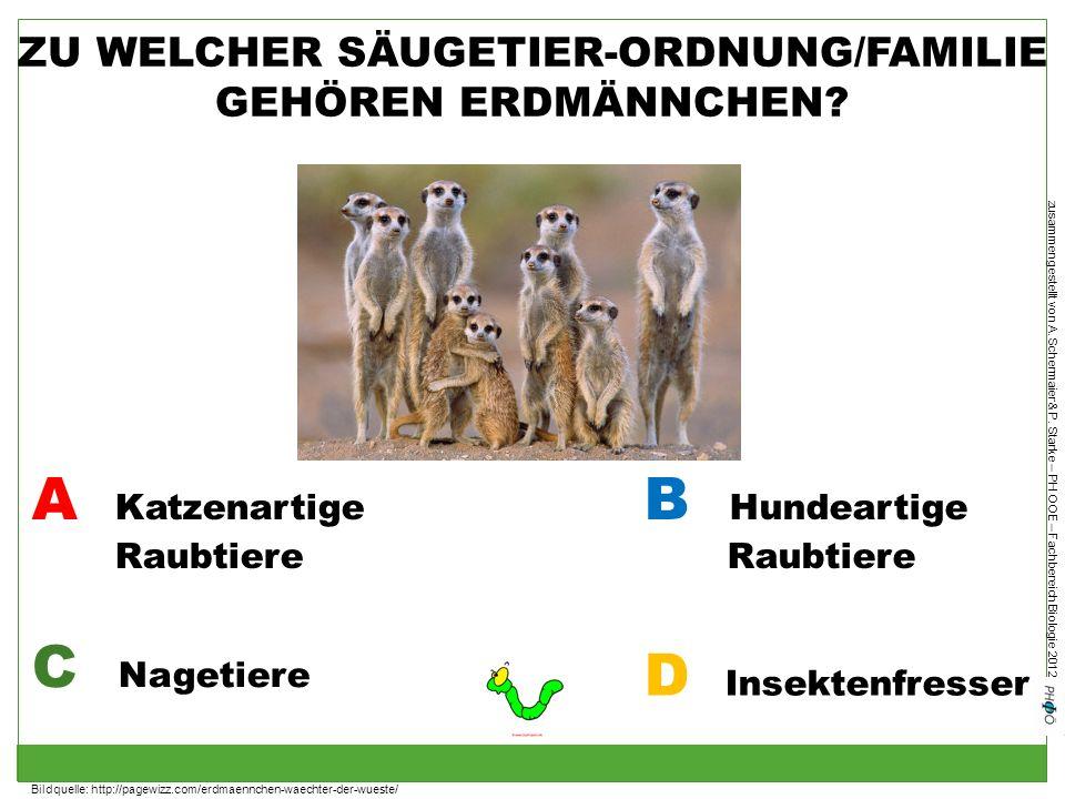 ZU WELCHER SÄUGETIER-ORDNUNG/FAMILIE GEHÖREN ERDMÄNNCHEN