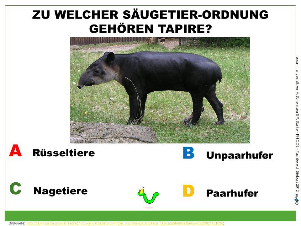ZU WELCHER SÄUGETIER-ORDNUNG GEHÖREN TAPIRE