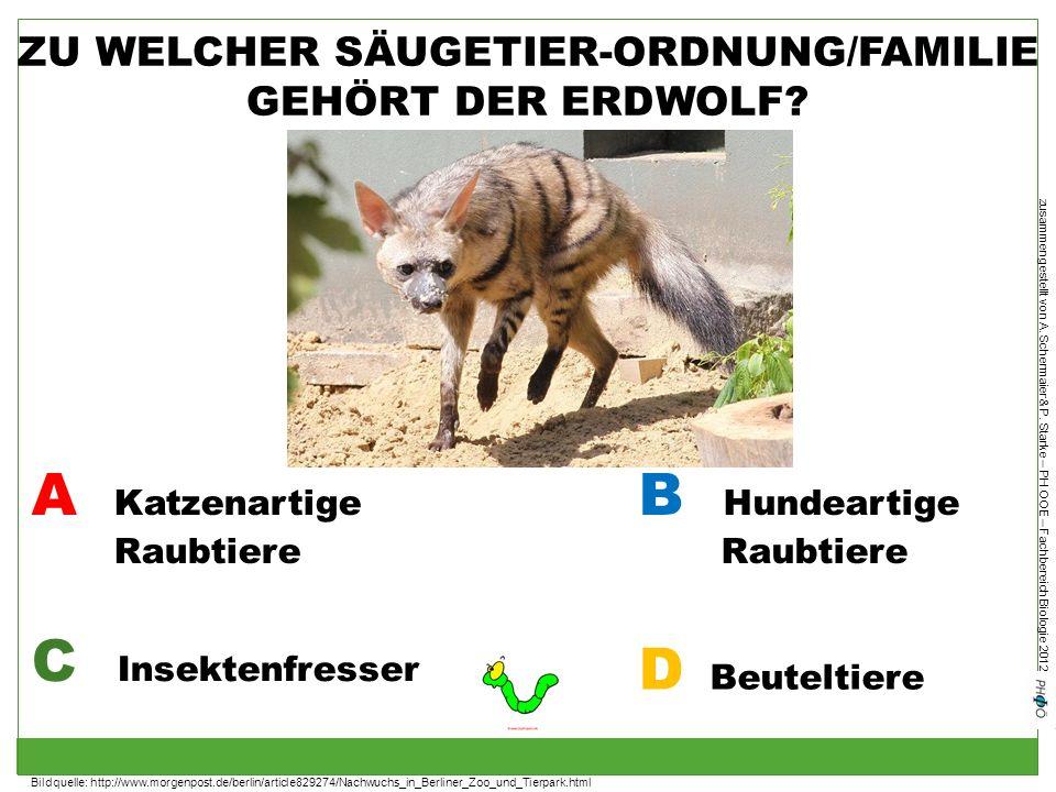 ZU WELCHER SÄUGETIER-ORDNUNG/FAMILIE GEHÖRT DER ERDWOLF