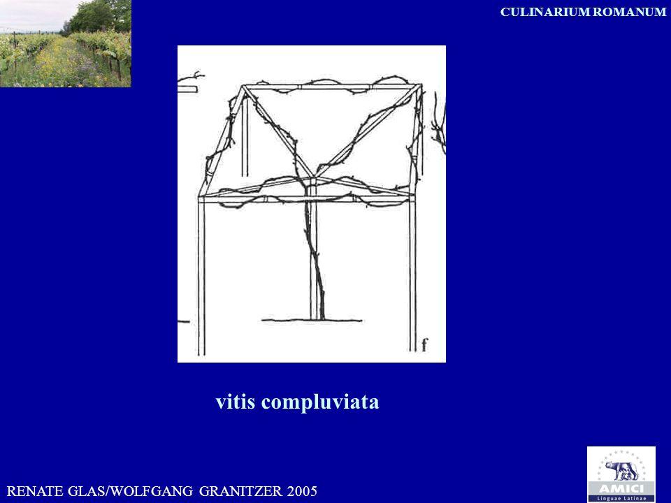 vitis compluviata RENATE GLAS/WOLFGANG GRANITZER 2005