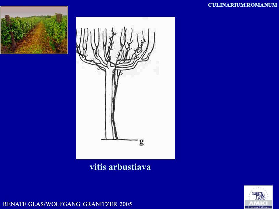 vitis arbustiava RENATE GLAS/WOLFGANG GRANITZER 2005