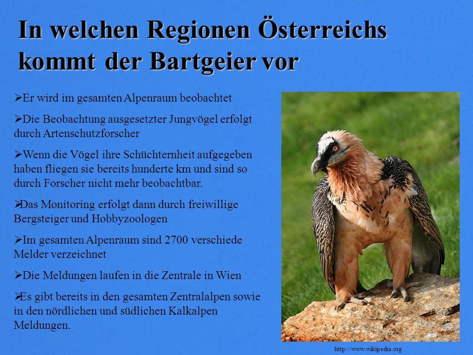 In welchen Regionen Österreichs kommt der Bartgeier vor