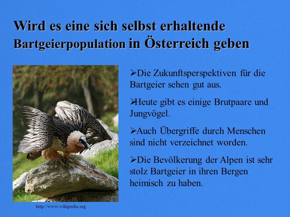 Wird es eine sich selbst erhaltende Bartgeierpopulation in Österreich geben