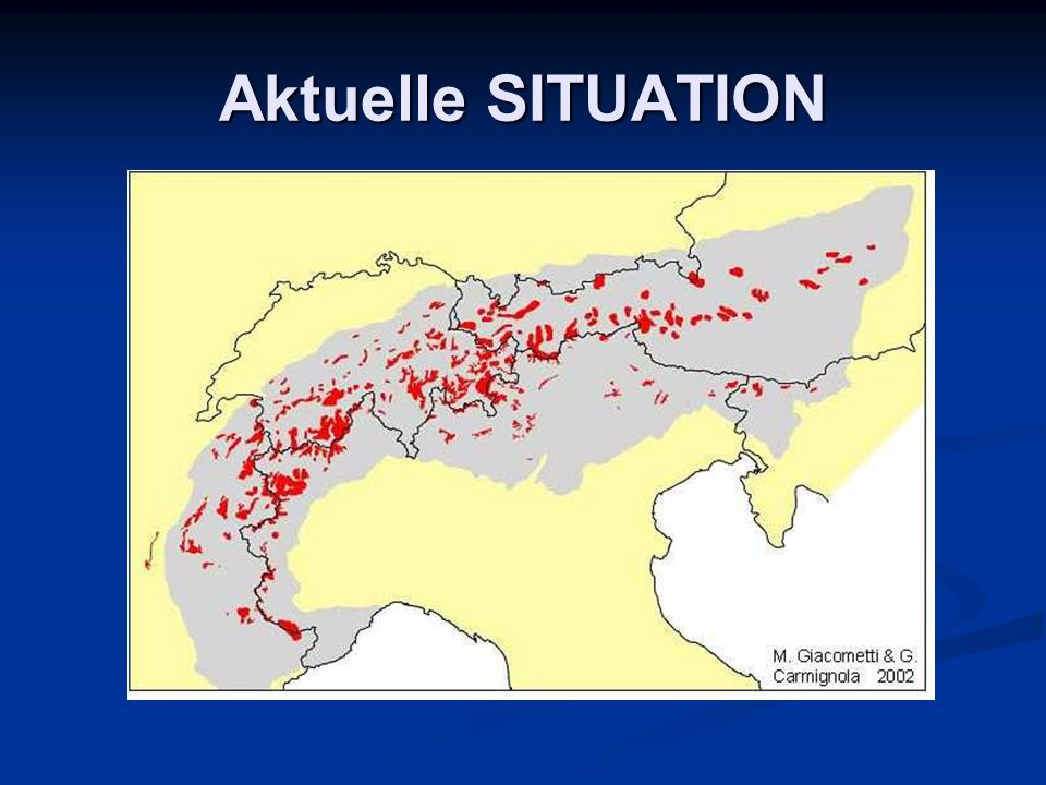 Aktuelle SITUATION © www.steinbock2006.ch