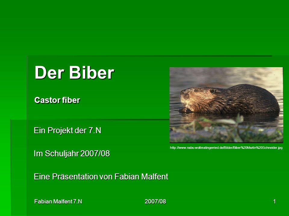 Der Biber Castor fiber Ein Projekt der 7.N Im Schuljahr 2007/08