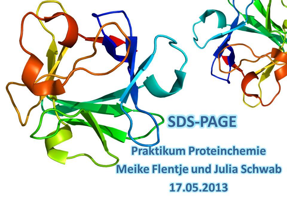 Praktikum Proteinchemie Meike Flentje und Julia Schwab 17.05.2013