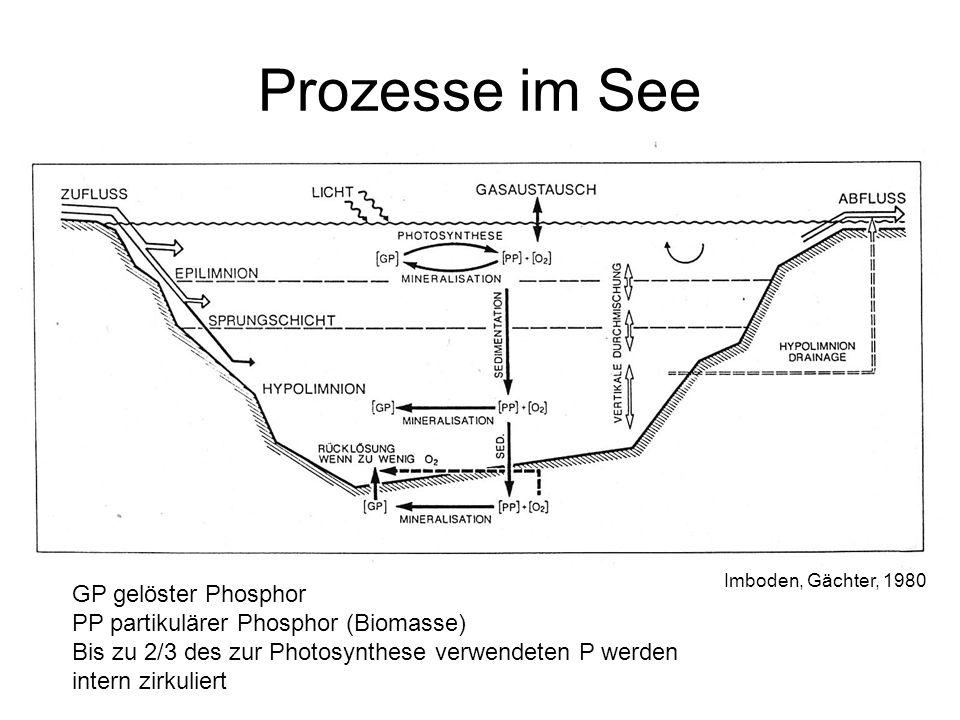 Prozesse im See GP gelöster Phosphor