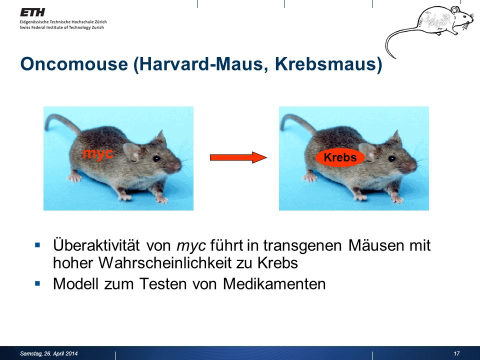 Oncomouse (Harvard-Maus, Krebsmaus)