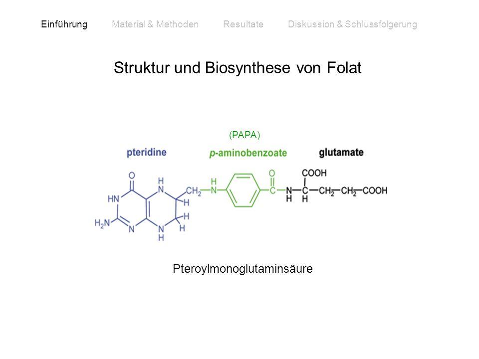 Struktur und Biosynthese von Folat