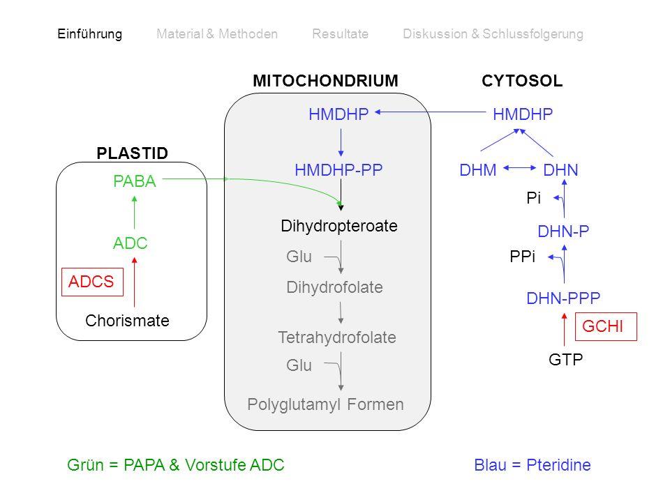 Grün = PAPA & Vorstufe ADC Blau = Pteridine