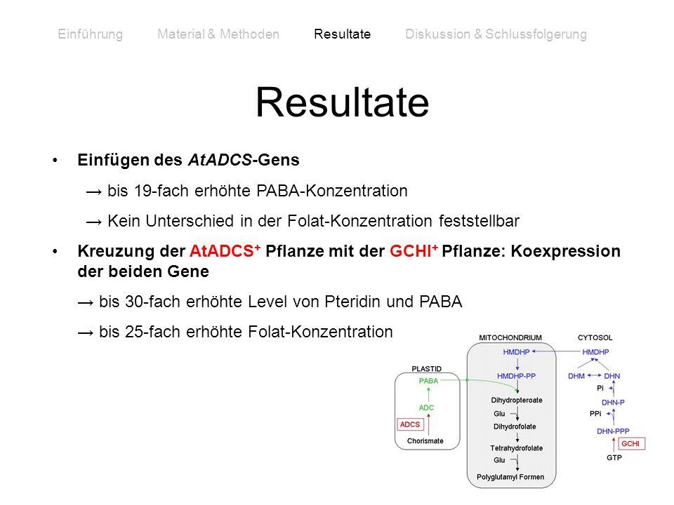 Resultate Einfügen des AtADCS-Gens