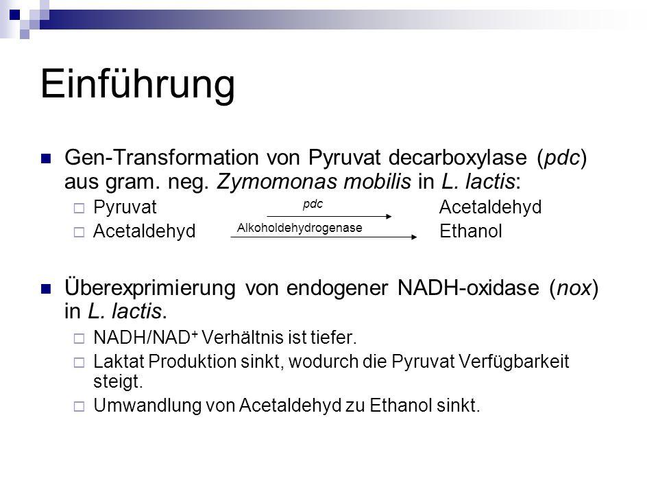 Einführung Gen-Transformation von Pyruvat decarboxylase (pdc) aus gram. neg. Zymomonas mobilis in L. lactis:
