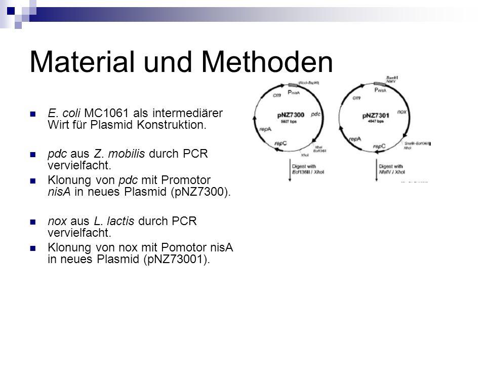 Material und Methoden E. coli MC1061 als intermediärer Wirt für Plasmid Konstruktion. pdc aus Z. mobilis durch PCR vervielfacht.