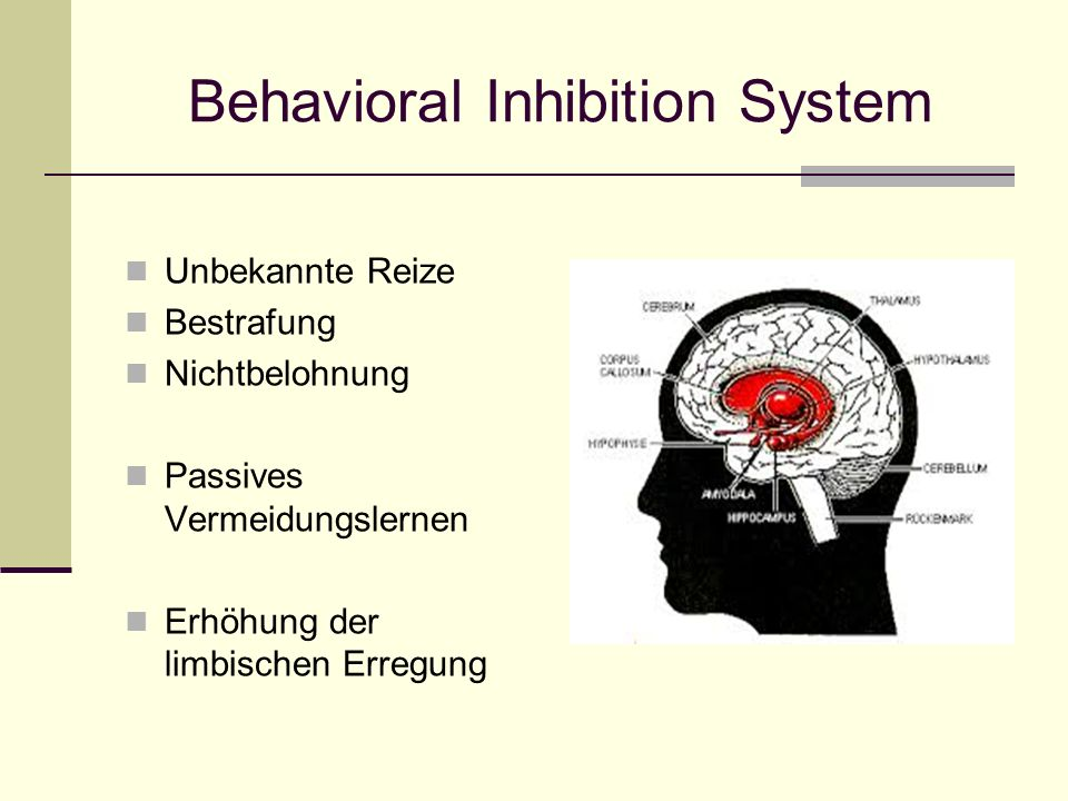 Behavioral Inhibition System