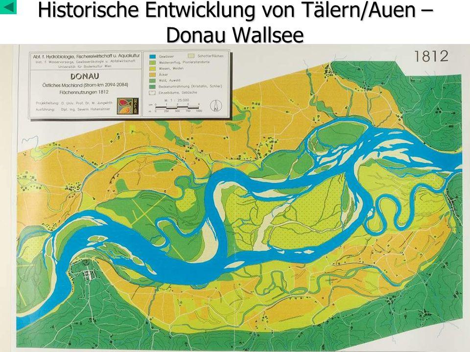 Historische Entwicklung von Tälern/Auen – Donau Wallsee