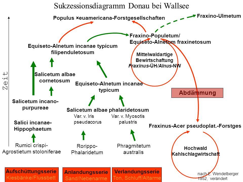 Sukzessionsdiagramm Donau bei Wallsee