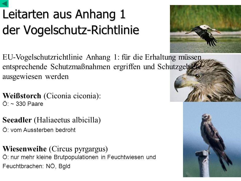 Leitarten aus Anhang 1 der Vogelschutz-Richtlinie