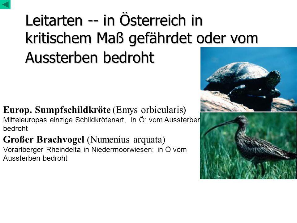 Leitarten -- in Österreich in kritischem Maß gefährdet oder vom Aussterben bedroht