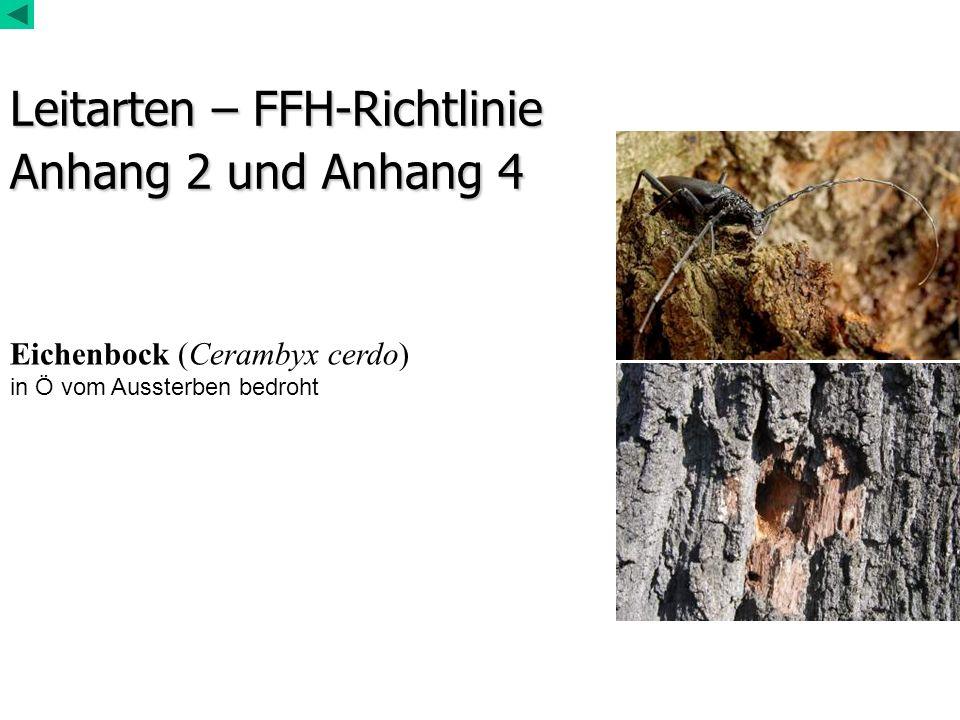 Leitarten – FFH-Richtlinie Anhang 2 und Anhang 4