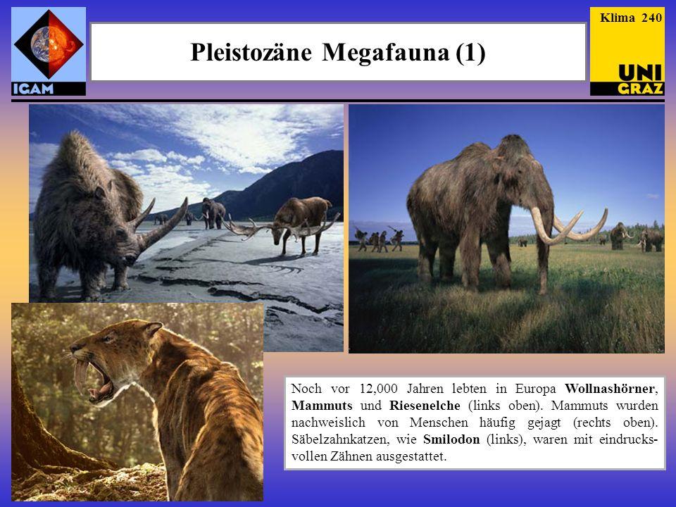 Pleistozäne Megafauna (1)