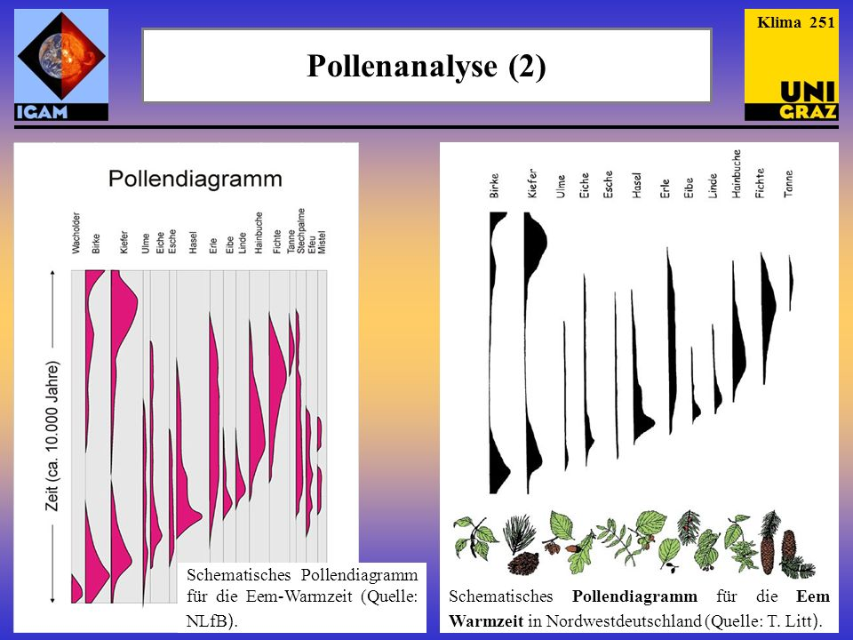 Klima 251 Pollenanalyse (2)