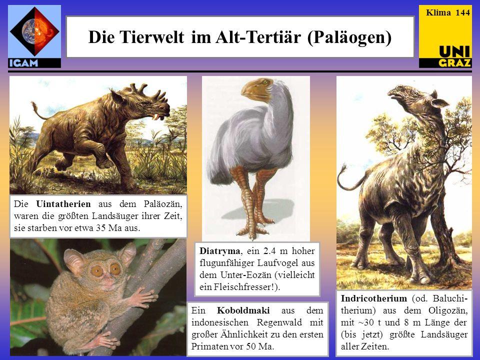 Die Tierwelt im Alt-Tertiär (Paläogen)