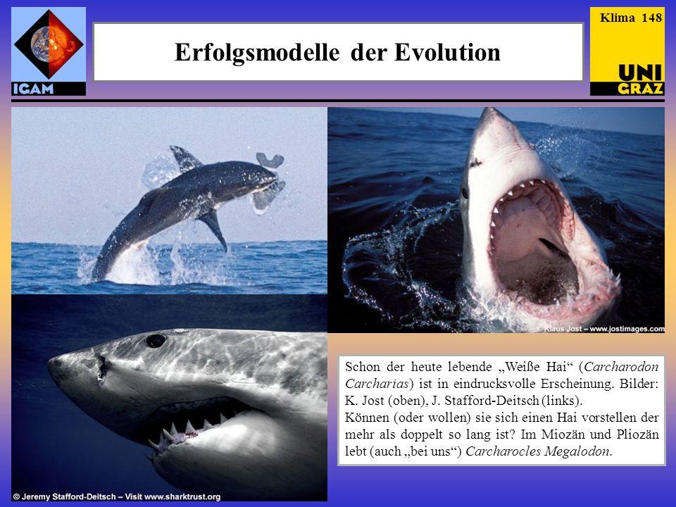 Erfolgsmodelle der Evolution