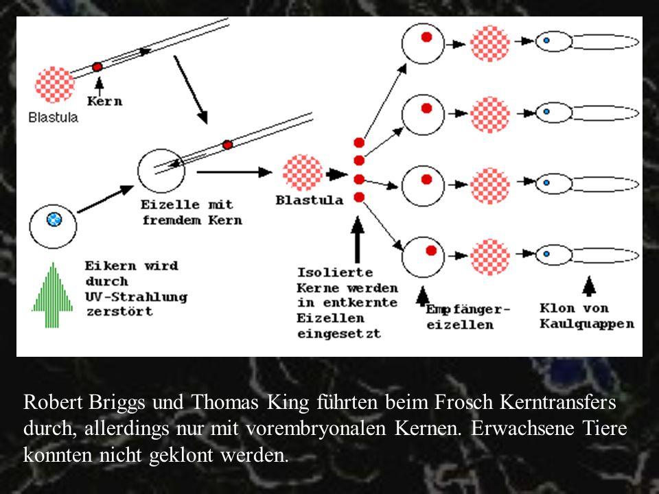 Robert Briggs und Thomas King führten beim Frosch Kerntransfers durch, allerdings nur mit vorembryonalen Kernen.