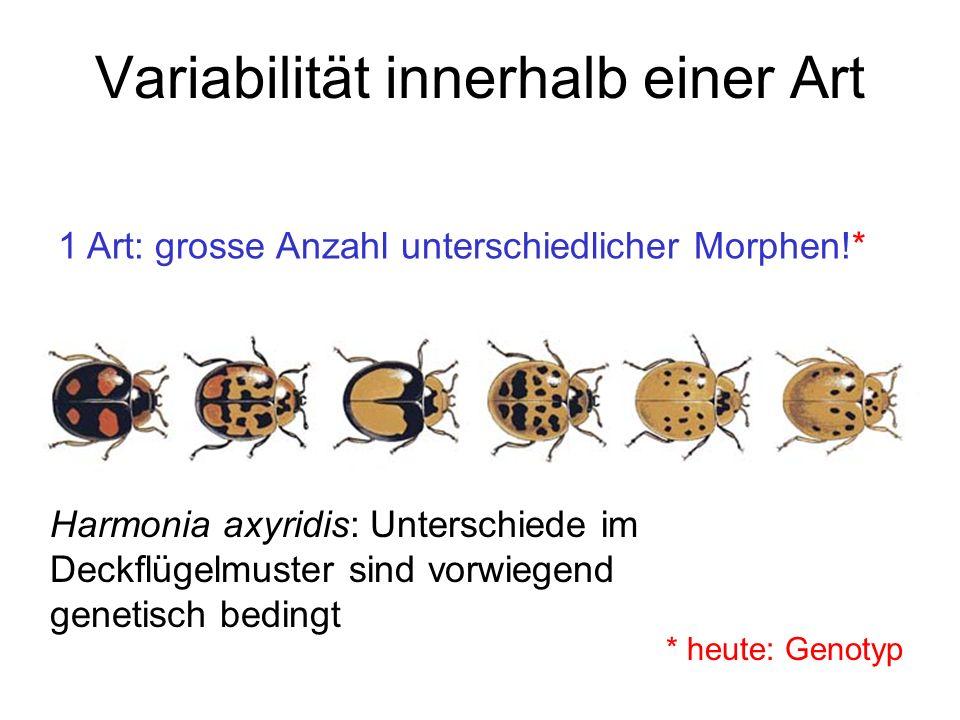 Variabilität innerhalb einer Art