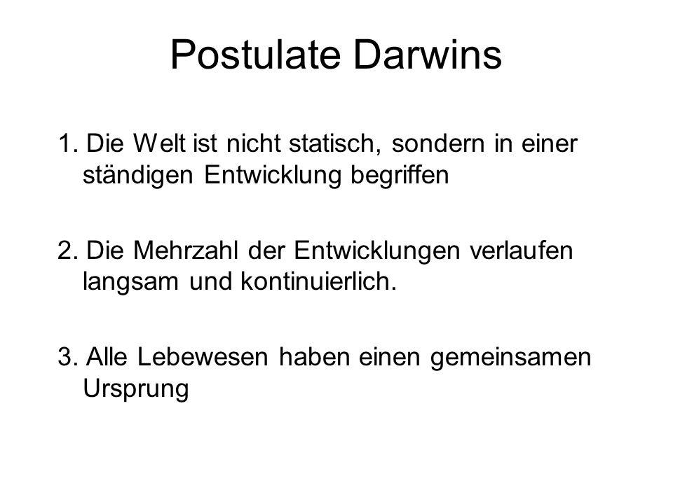 Postulate Darwins 1. Die Welt ist nicht statisch, sondern in einer ständigen Entwicklung begriffen.